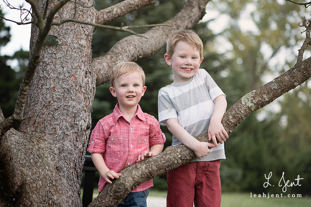 brothers climbing a tree
